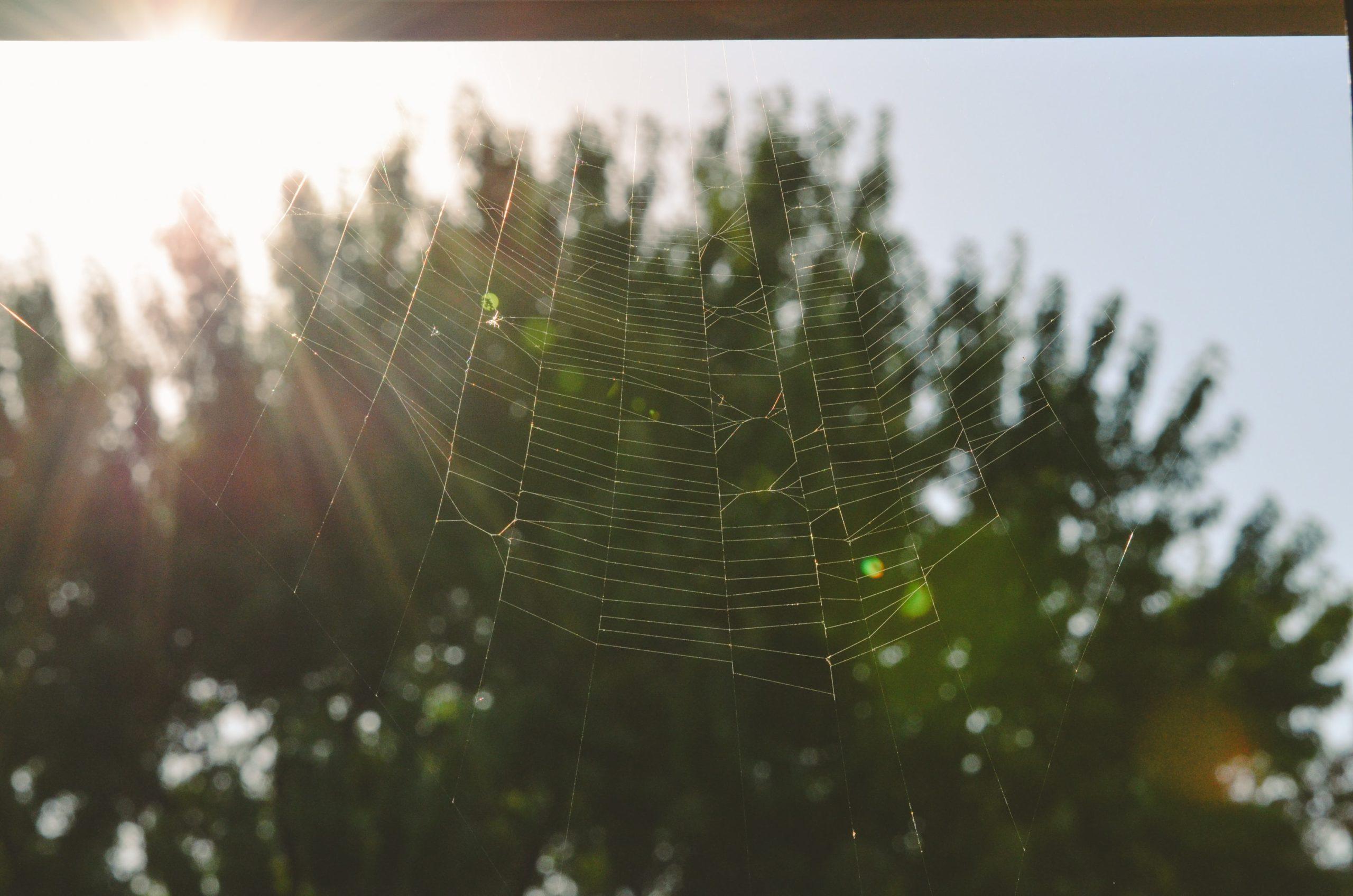 """Ogni PMI dovrebbe dotarsi di un sito web """"ragionato"""" e aggiornato"""